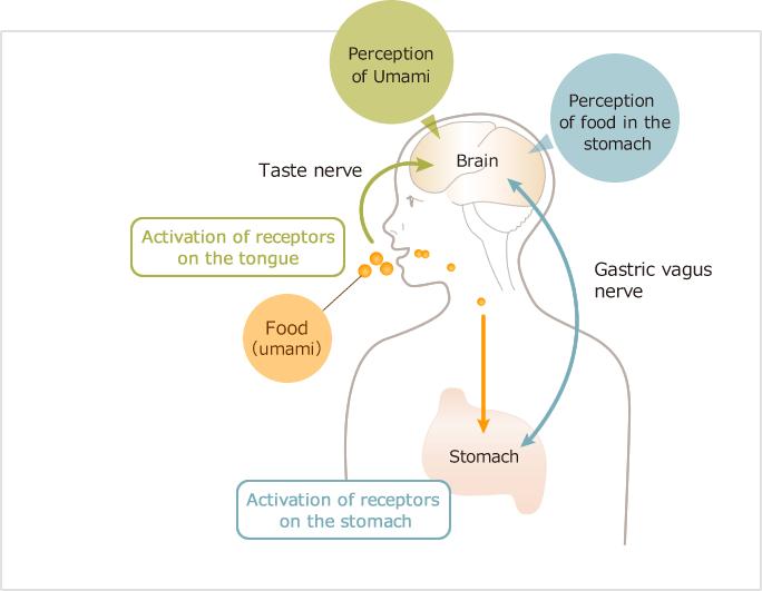 Intake of Glutamate Rich Food